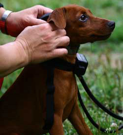 Small dog with collar