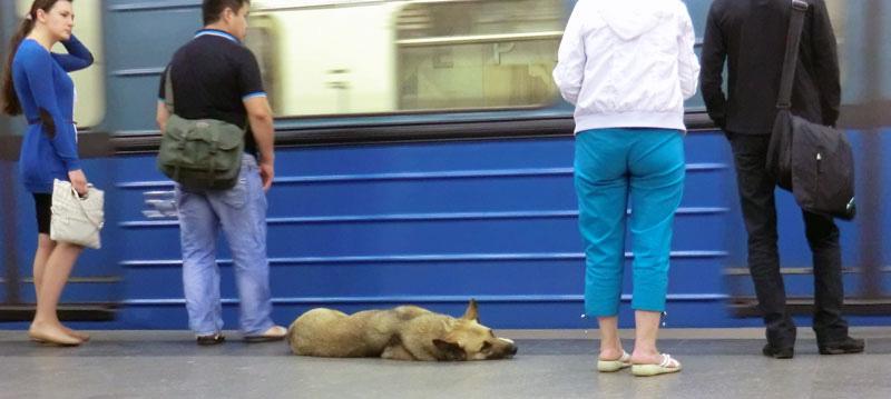 dog by train