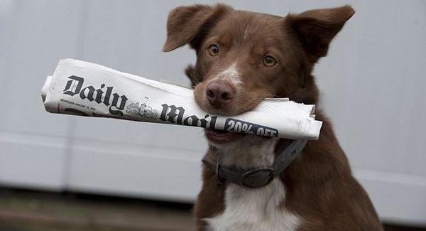dog take press